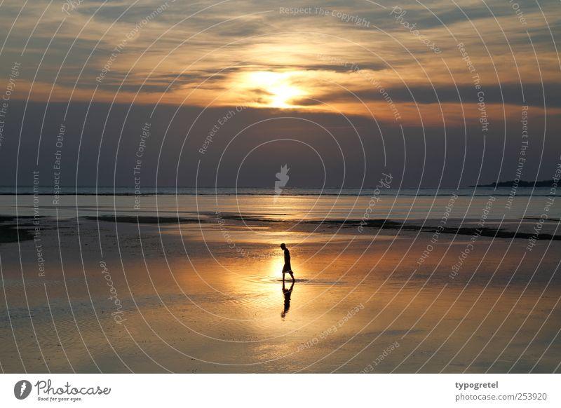 Walking-Man Ferien & Urlaub & Reisen Ferne Sommerurlaub Strand Meer Mann Erwachsene 1 Mensch Wolken Horizont Sonnenaufgang Sonnenuntergang Küste gehen gold
