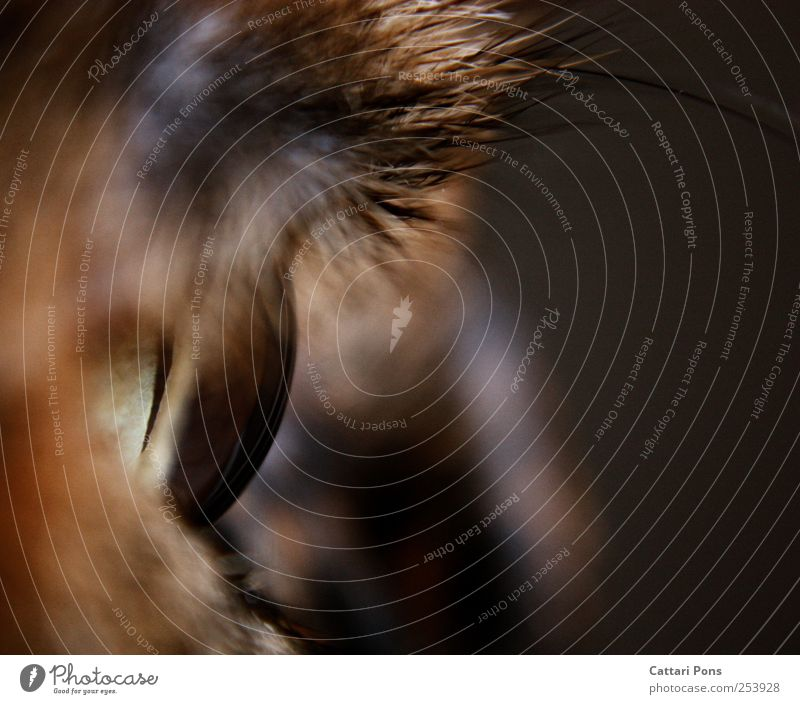 Crystal Ball Katze Tier Auge beobachten nah Tiergesicht Haustier Makroaufnahme Regenbogenhaut Nahaufnahme Katzenauge Hornschicht