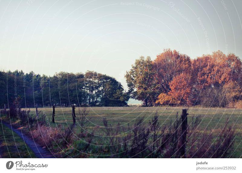 tristesse multicolore Umwelt Natur Landschaft Wolkenloser Himmel Schönes Wetter Baum Wiese Feld Wald gelb Weide Zaun Wege & Pfade flach Herbst herbstlich ruhig