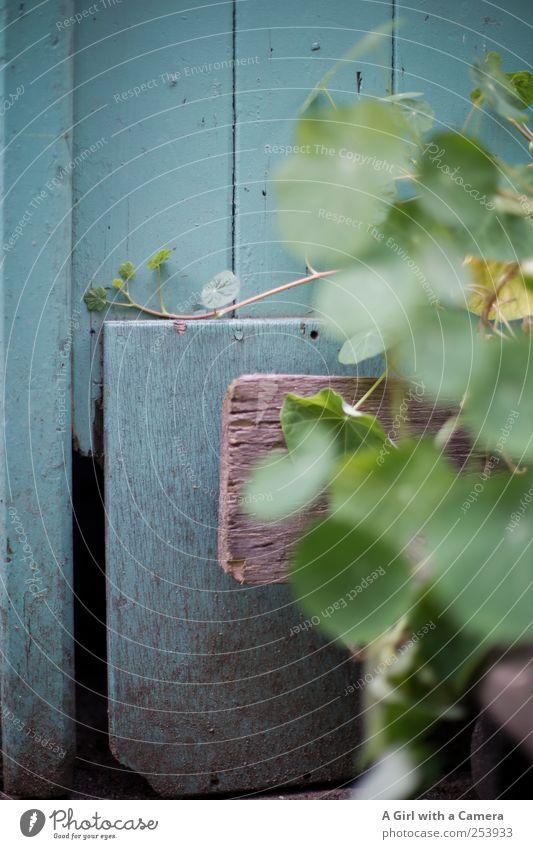 backyard scene Natur blau grün Pflanze Herbst Wand Garten frisch natürlich Fröhlichkeit Tisch einfach Holzbrett welk Nutzpflanze gestrichen