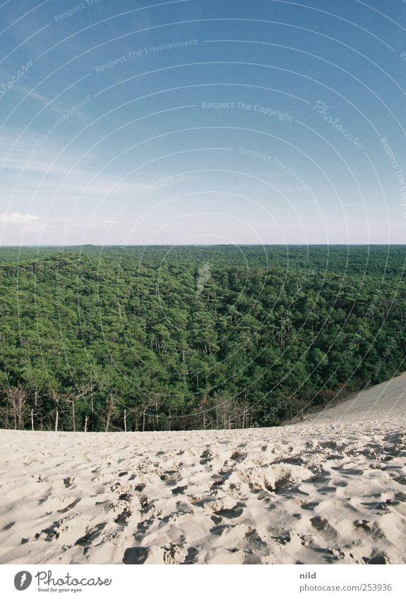 Dünenwandern Himmel Natur blau grün Baum Pflanze Ferien & Urlaub & Reisen Sommer ruhig Tier Ferne Wald Erholung Umwelt Landschaft Sand