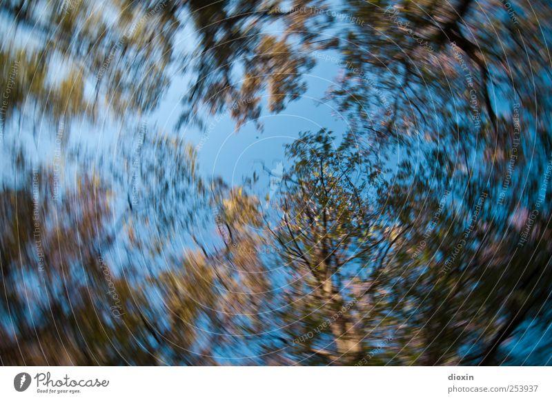 Karussellperspektive Himmel Wolkenloser Himmel Baum Blatt Wildpflanze Park Wald drehen Wachstum Natur Drehung Umdrehungsgeschwindigkeit Farbfoto Außenaufnahme