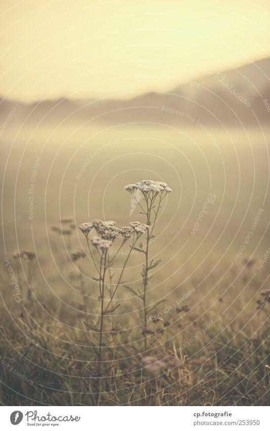 Nebelbank Pflanze kalt Wiese Herbst Landschaft Schönes Wetter Wildpflanze
