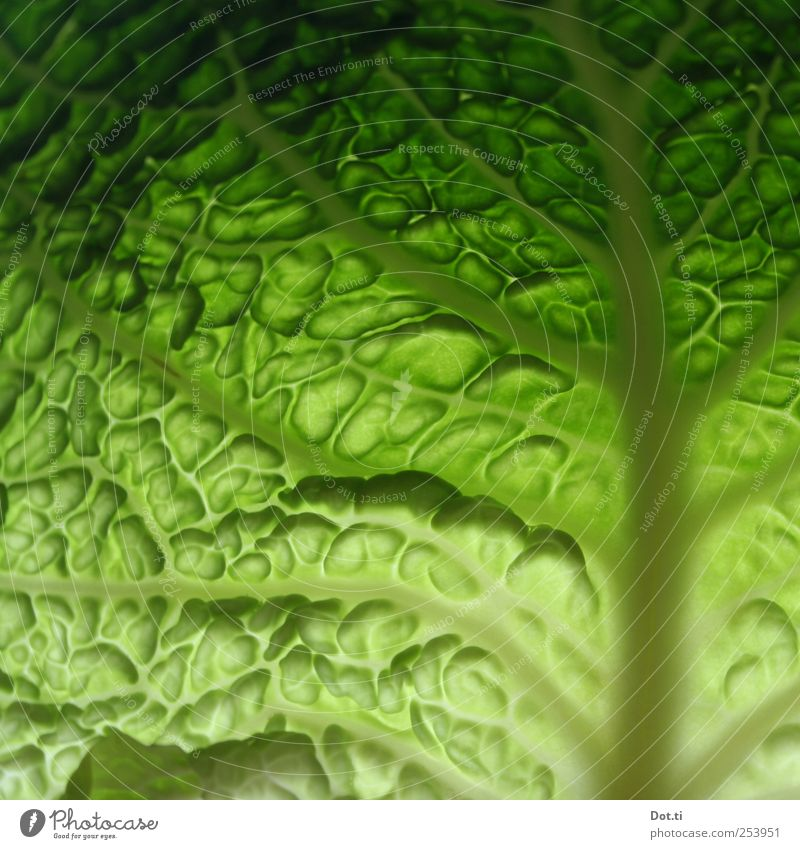 ein Blatt für Eva Lebensmittel Gemüse Pflanze grün frisch knackig roh Wirsing Kohl Blattrispe Poren wellig Vegetarische Ernährung Farbfoto Nahaufnahme
