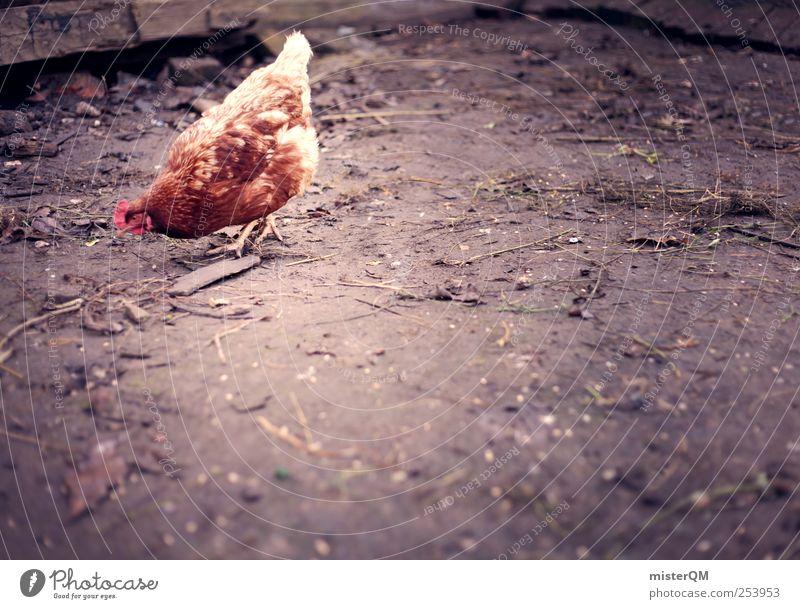 Freilandhaltung. Einsamkeit Tier ästhetisch Suche Boden Bauernhof Metallfeder ökologisch Haushuhn Tierzucht Nahrungssuche