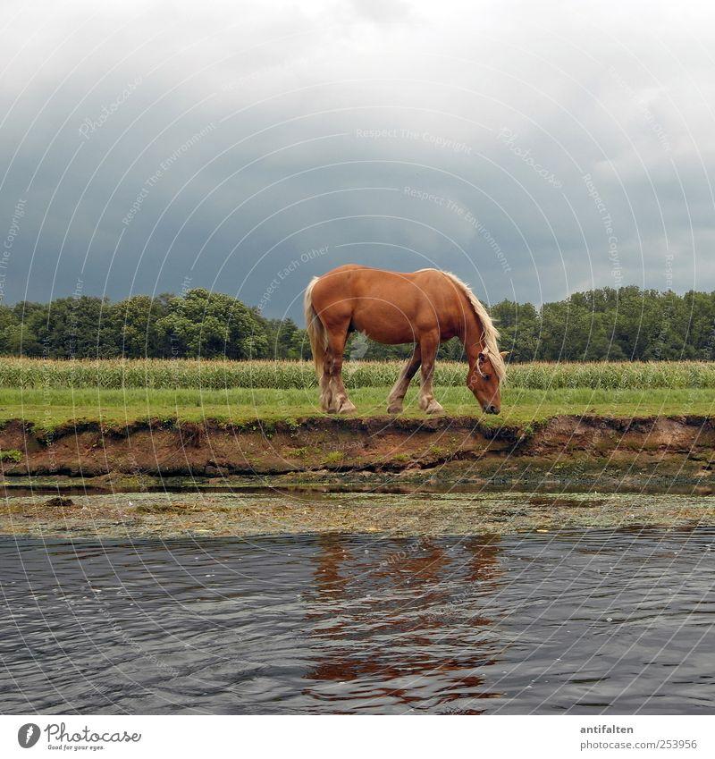 Junggesellinnenabschied Natur Tier Erde Wasser Himmel Wolken Gewitterwolken Sommer Gras Sträucher Wiese Feld Flussufer Bach Weide Wildtier Pferd Tiergesicht