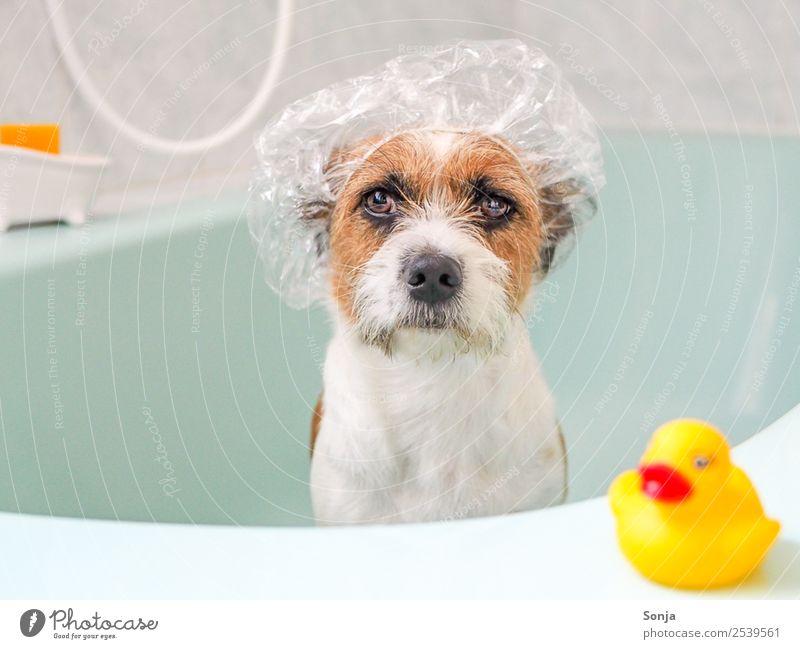 Hund, Haustier, Tier, Badewanne Erholung Freude gelb lustig Schwimmen & Baden braun sitzen genießen Coolness Sauberkeit Wellness Kunststoff