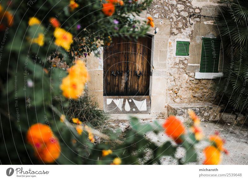 Alte Haustür mit Blumen im Vordergrund Abenteuer Sightseeing Sommerurlaub Häusliches Leben Traumhaus Pflanze Blatt Blüte Grünpflanze Fischerdorf Hütte