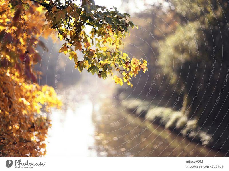 Schöne Zeit. Natur Wasser Baum Pflanze Blatt Wald Herbst Umwelt Landschaft Park Wetter Zufriedenheit gold ästhetisch Fluss Idylle