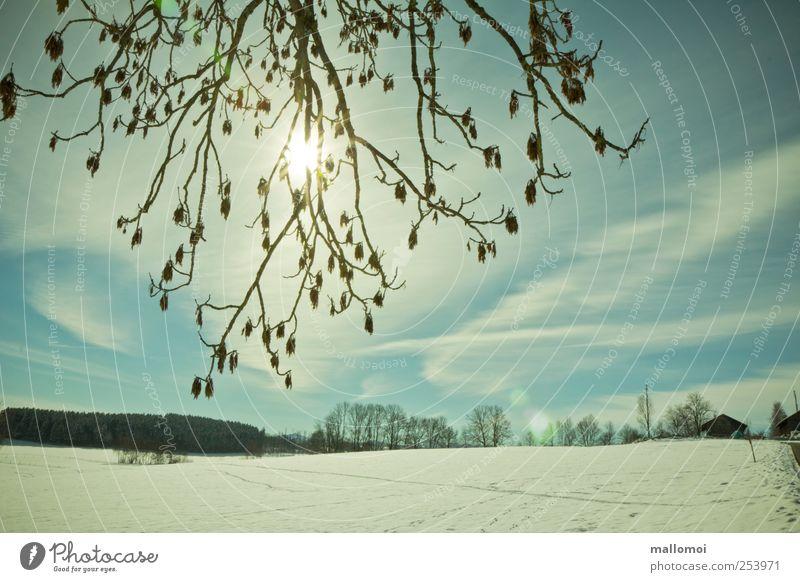 Wintersonne scheint durch Zweige über Schneefeld Winterurlaub Schneelandschaft Wintermorgen Himmel Wolken Zweige u. Äste Sonne Sonnenlicht Klima Klimawandel