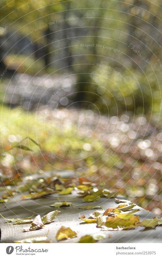 Der Weg zum See weiß grün Baum Blatt ruhig Wald Erholung Leben Herbst grau Bewegung Wege & Pfade Stimmung Park hell gold