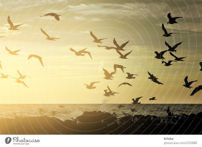 Ausflug Himmel Natur Wasser Strand Tier schwarz gelb Freiheit Landschaft Küste gold fliegen Flügel Romantik Urelemente Reisefotografie