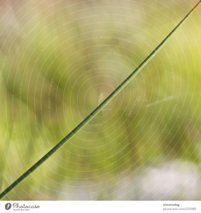45 grad Natur Pflanze Sommer Herbst Schönes Wetter Gras Wildpflanze Garten Wiese ästhetisch dünn einfach fest lang natürlich saftig grün Frühlingsgefühle