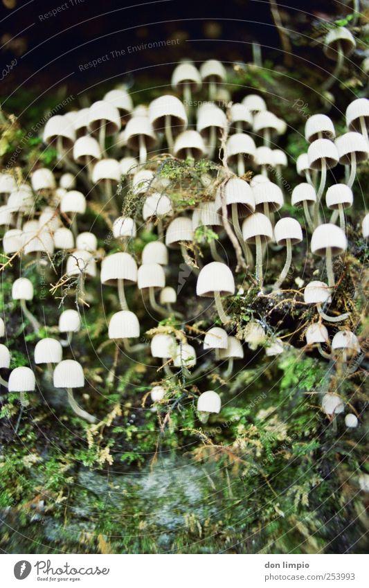 wachstum 2 Natur Herbst klein Zusammensein Wachstum analog Pilz Moos Pflanze
