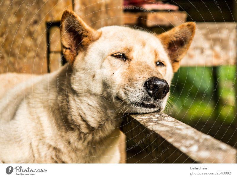 grenzüberschreitung | schlafende hunde soll man nicht wecken Ferien & Urlaub & Reisen Hund schön Erholung Tier Ferne Auge Tourismus Freiheit Ausflug träumen