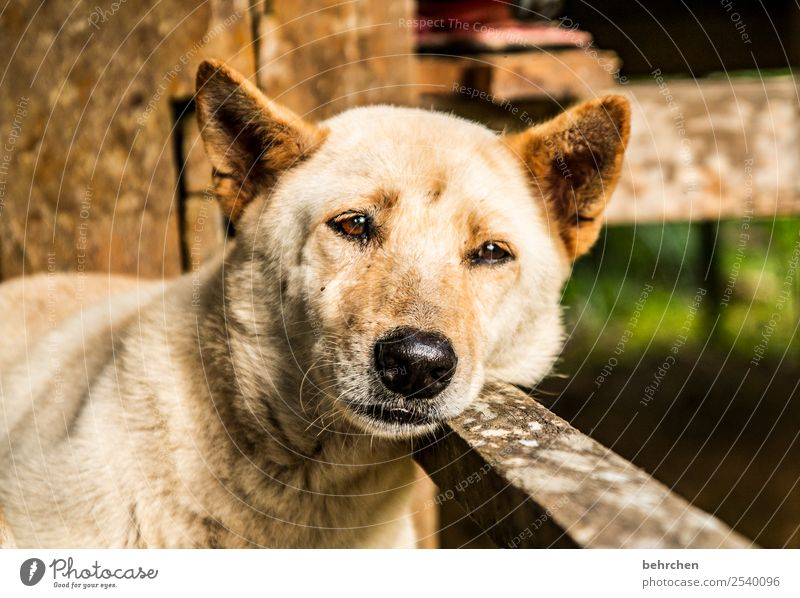 montagsmüde Ferien & Urlaub & Reisen Hund Erholung Tier Ferne Auge Tourismus Freiheit Ausflug Abenteuer niedlich schlafen Nase Asien Ohr Haustier