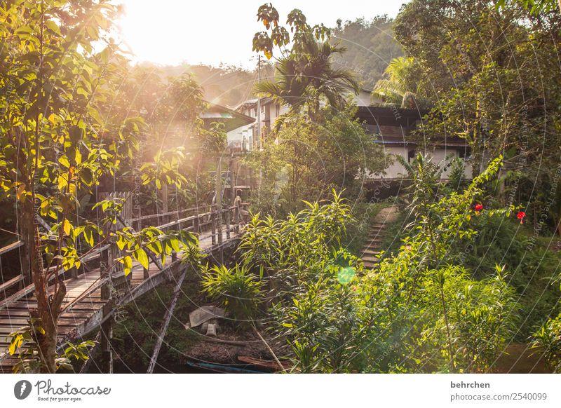 wärme Ferien & Urlaub & Reisen Tourismus Ausflug Abenteuer Ferne Freiheit Natur Landschaft Baum Sträucher Palme Urwald außergewöhnlich exotisch fantastisch