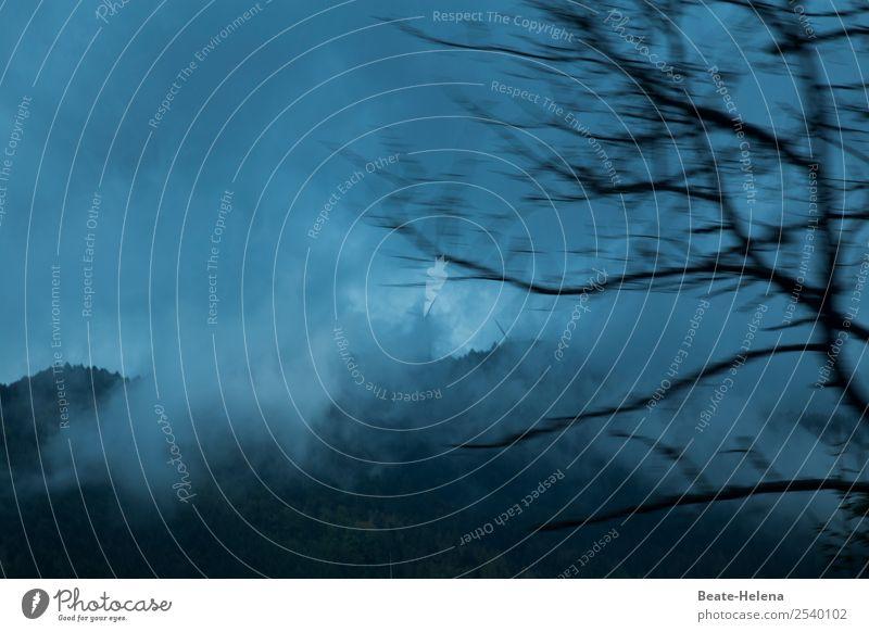 Krimi   Auf der Flucht Natur Ferien & Urlaub & Reisen blau Landschaft Baum Wald Berge u. Gebirge dunkel schwarz Stimmung fliegen Ausflug Regen Angst Nebel