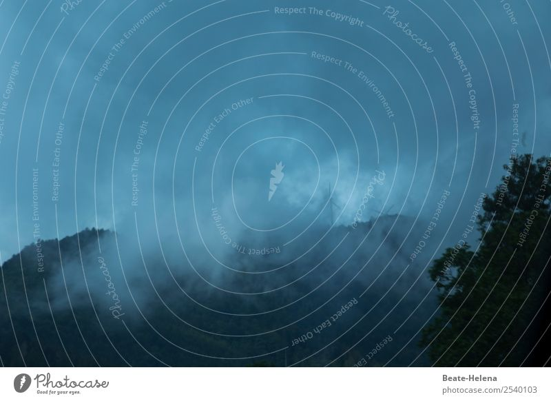vernebelte Zeiten Ausflug Natur Landschaft Pflanze Himmel Wolken Herbst Wetter schlechtes Wetter Nebel Regen Baum Wald Schwarzwald Ferien & Urlaub & Reisen