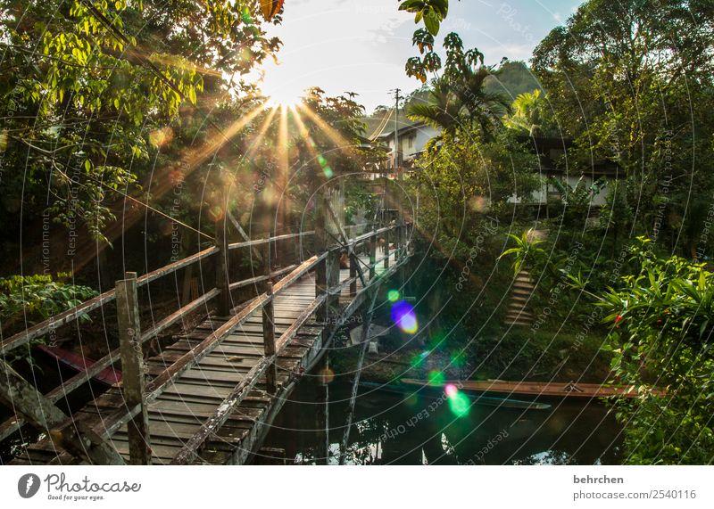 einfach nur sein! Ferien & Urlaub & Reisen Tourismus Ausflug Abenteuer Ferne Freiheit Natur Landschaft Sonne Sonnenaufgang Sonnenuntergang Pflanze Baum