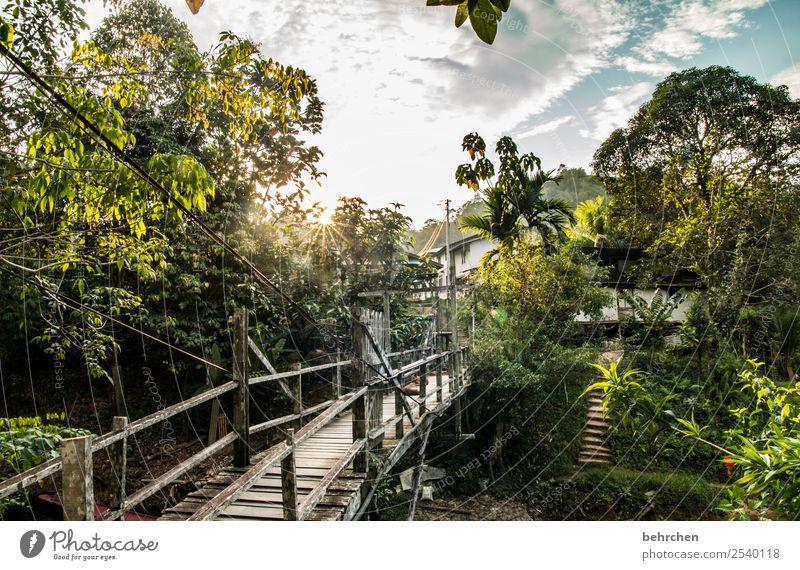 zuhause Ferien & Urlaub & Reisen Natur schön Landschaft Baum ruhig Ferne Wärme Tourismus außergewöhnlich Freiheit Häusliches Leben Ausflug Idylle Abenteuer