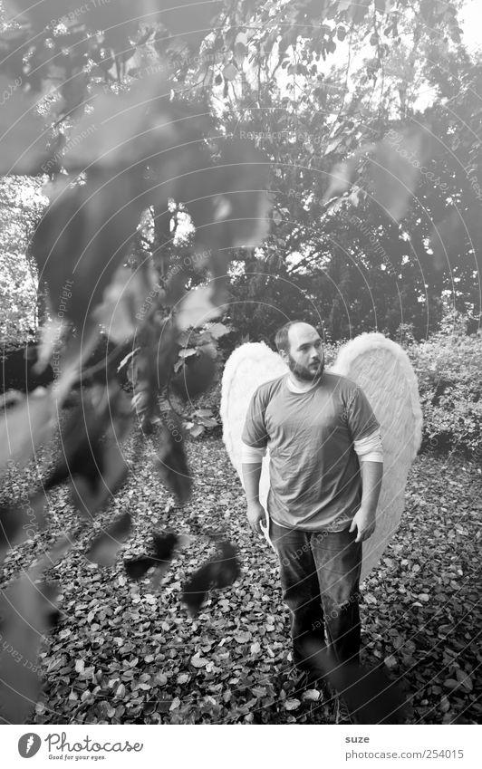 Engel Mensch Mann Natur Pflanze Blatt Erwachsene Herbst Umwelt Religion & Glaube Park Erde maskulin außergewöhnlich stehen Flügel Hoffnung