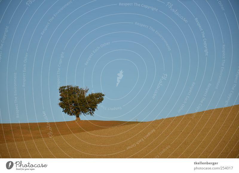 Bella Toscana Natur Pflanze Erde Sand Wolkenloser Himmel Herbst Schönes Wetter Dürre Baum Feld Hügel alt wandern fest nachhaltig blau braun Landwirtschaft