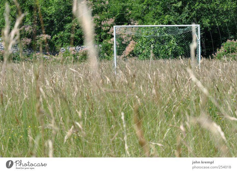 Wo ist Theodor? Sport Ballsport Fußball Sportstätten Fußballplatz Umwelt Pflanze Baum Gras Garten Park Wiese Blühend Spielen Wachstum wild grün Freizeit & Hobby