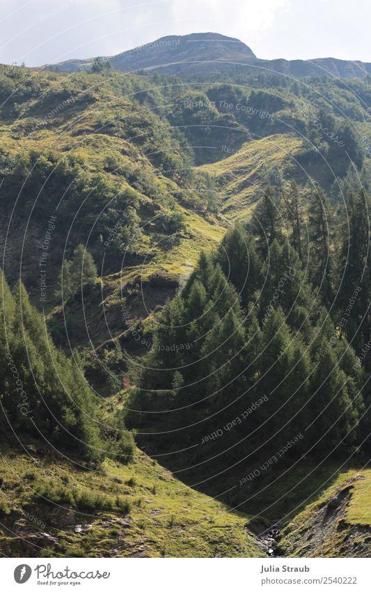 Berge Schweiz Baum Natur Ferien & Urlaub & Reisen Sommer Pflanze Landschaft Sonne Berge u. Gebirge natürlich Gras Erde groß Unendlichkeit Moos