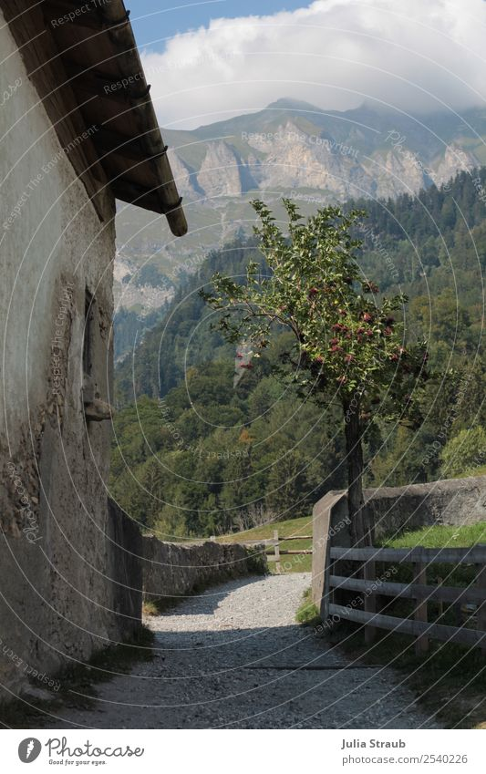 Schweiz Weg Berge Baum Natur Landschaft Wolken Sonne Sommer Gras Apfelbaum Garten Berge u. Gebirge Gipfel Haus Mauer Wand Treppengeländer alt grau grün