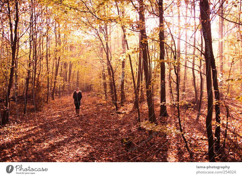 Herbstspaziergang Mensch Baum rot Wald Herbst laufen Spaziergang Herbstlaub herbstlich Herbstfärbung Waldlichtung Pflanze Herbstwald Herbstlandschaft Lichtstimmung
