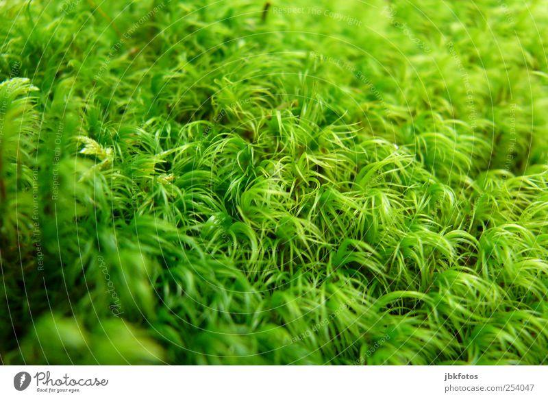 green hype Natur Pflanze Umwelt Garten Politik & Staat Fortschritt bedeckt Grünpflanze Waldboden Wildpflanze einfarbig Moosteppich