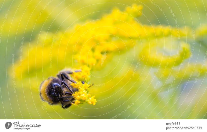Seitlich Ausflug Umwelt Natur Sonne Sonnenlicht Frühling Sommer Schönes Wetter Pflanze Blume Blüte Garten Park Wiese Tier Nutztier Wildtier Tiergesicht Flügel