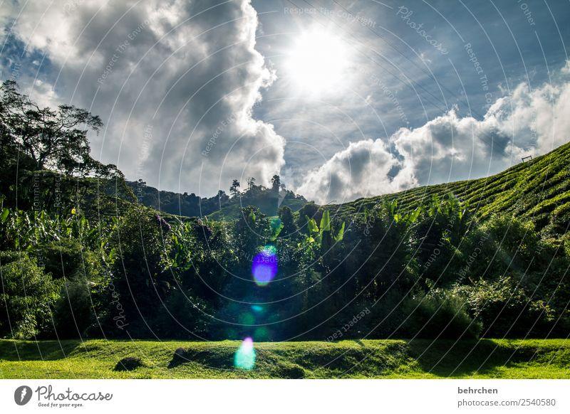 verwandlung | nach regen kommt sonne Himmel Ferien & Urlaub & Reisen Natur schön grün Landschaft Sonne Baum Wolken Blatt Ferne Berge u. Gebirge Tourismus