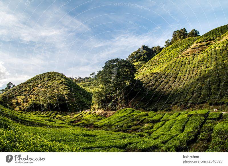 hinter den sieben bergen Ferien & Urlaub & Reisen Tourismus Ausflug Abenteuer Ferne Freiheit Natur Landschaft Himmel Pflanze Baum Blatt Nutzpflanze Teepflanze