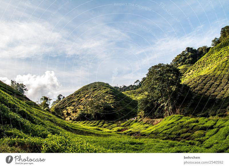 cameron highlands Natur Ferien & Urlaub & Reisen Pflanze schön grün Landschaft Baum Erholung Ferne Berge u. Gebirge Tourismus Freiheit außergewöhnlich Ausflug