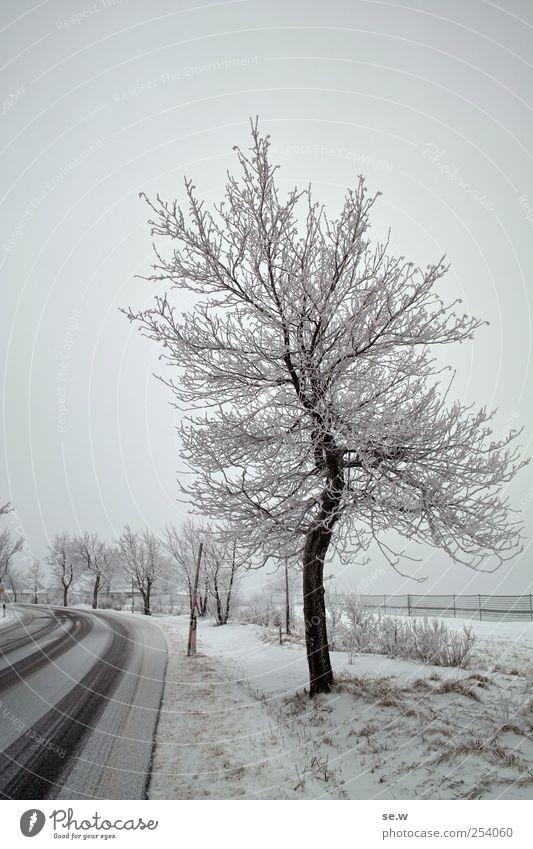 Baum Himmel Winter Nebel Schnee Feld Straße fahren kalt Neuschnee Farbfoto Außenaufnahme Menschenleer Dämmerung Kontrast Silhouette Totale