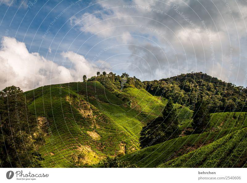 licht und schatten Himmel Ferien & Urlaub & Reisen Natur schön grün Landschaft Baum Wolken Wald Ferne Berge u. Gebirge Umwelt Tourismus außergewöhnlich Freiheit