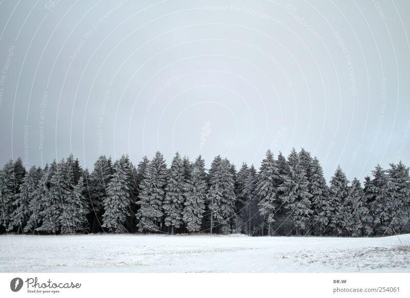 winterlicher Märchenwald Himmel Natur weiß Winter Wolken ruhig schwarz Wald kalt Schnee Umwelt Berge u. Gebirge Wetter Feld Eis Frost