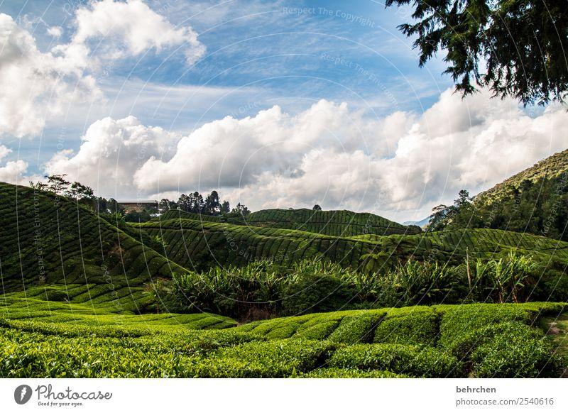 ein bisschen tee gegen die kälte Himmel Ferien & Urlaub & Reisen Natur Pflanze grün Landschaft Baum Wolken Blatt Ferne Berge u. Gebirge Tourismus