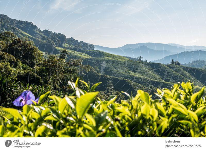 und was is mit teeeee? Ferien & Urlaub & Reisen Natur Pflanze schön grün Landschaft Blatt Ferne Berge u. Gebirge Blüte Tourismus außergewöhnlich Freiheit