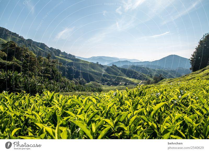 für teeliebhaber Himmel Ferien & Urlaub & Reisen Natur Pflanze grün Landschaft Baum Blatt Ferne Berge u. Gebirge Tourismus außergewöhnlich Freiheit Ausflug Feld