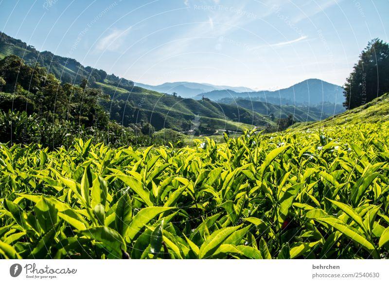 es gibt tee, baby Natur Ferien & Urlaub & Reisen Pflanze schön grün Landschaft Baum Blatt Wald Ferne Tourismus Freiheit außergewöhnlich Ausflug Feld Abenteuer