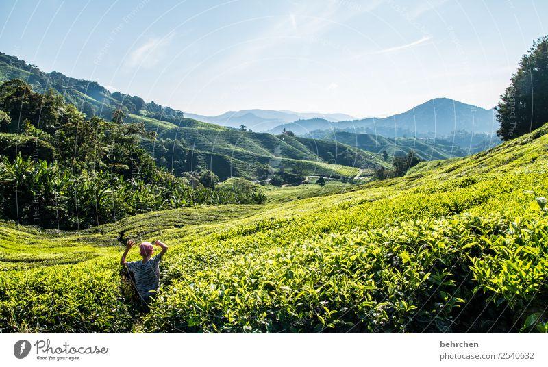 grenzüberschreitung | neue wege entdecken Kind Natur Ferien & Urlaub & Reisen Pflanze schön grün Landschaft Baum Blatt Wald Ferne Berge u. Gebirge Spielen