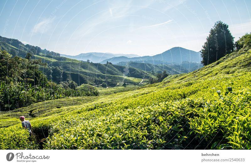 im tee wandeln Natur Ferien & Urlaub & Reisen Pflanze schön grün Landschaft Baum Blatt Ferne Berge u. Gebirge Junge Tourismus außergewöhnlich Freiheit Ausflug