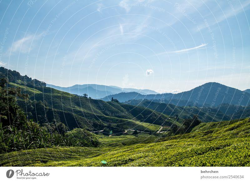 weitblick Ferien & Urlaub & Reisen Tourismus Ausflug Abenteuer Ferne Freiheit Natur Landschaft Baum Sträucher Blatt Nutzpflanze Teepflanze Teeplantage Feld