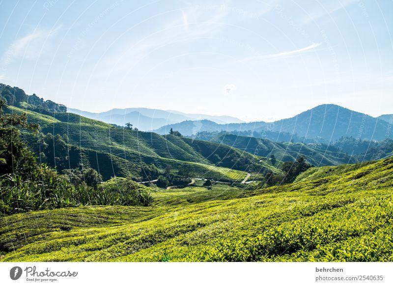 teepäuschen Himmel Ferien & Urlaub & Reisen Natur Pflanze grün Landschaft Baum Wolken Blatt Ferne Berge u. Gebirge Tourismus außergewöhnlich Freiheit Ausflug