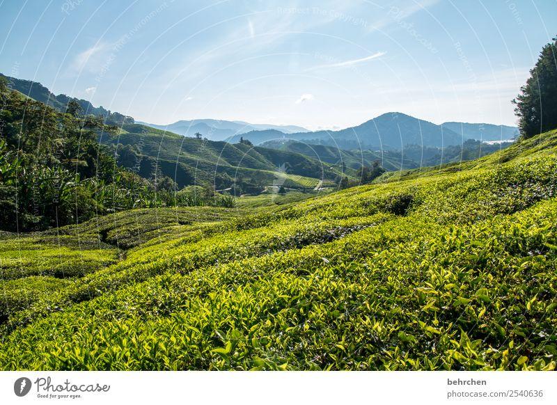 teepause Malaysia cameron highlands Tee Teepflanze Teeplantage weite Ferne Fernweh reisen Ferien & Urlaub & Reisen Tourismus Ausflug Abenteuer Freiheit Natur