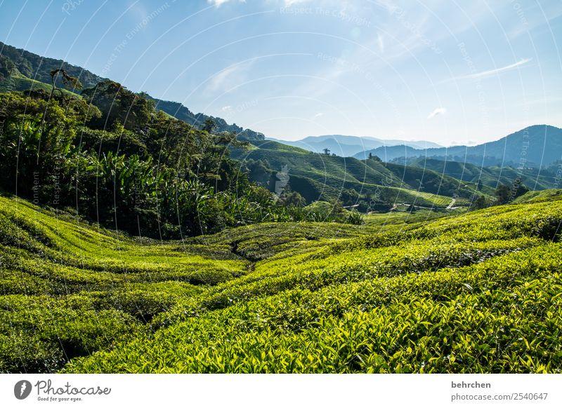 fahrt ins grüne Ferien & Urlaub & Reisen Tourismus Ausflug Abenteuer Ferne Freiheit Natur Landschaft Himmel Baum Sträucher Blatt Teepflanze Teeplantage Feld