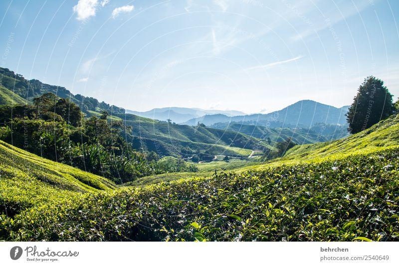 teeaussichten Himmel Ferien & Urlaub & Reisen Natur Pflanze grün Landschaft Baum Blatt Ferne Berge u. Gebirge Tourismus außergewöhnlich Freiheit Ausflug Feld